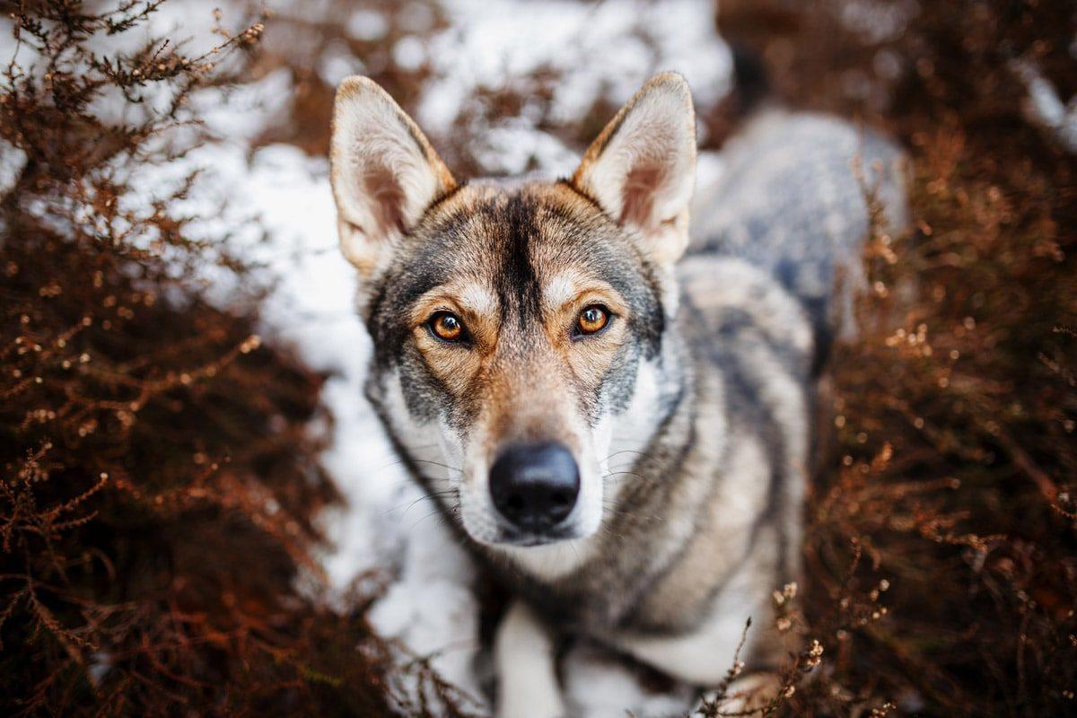 Hunde Fotoshooting Fotografie Tierfotografie Würzburg